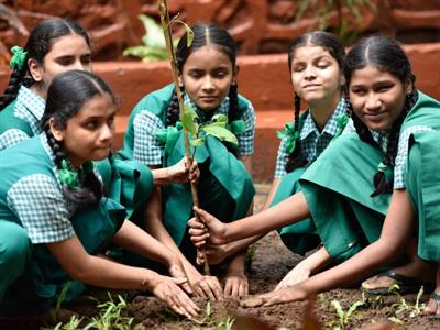 2 Marks For Planting 2 Trees