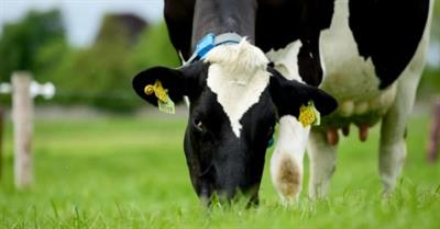Advantages Of Maintaining Dairy