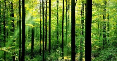 Human Impact On Forests