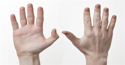 Do You Know Our Primitive Hands?