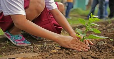 Practices for Afforestation